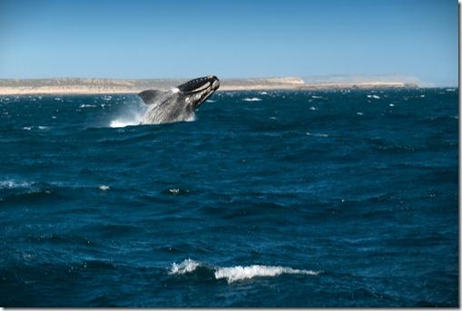 Puerto Madryn 14-10-2011 163