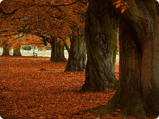 Autumn in Lincolnshire at Normanby Hall