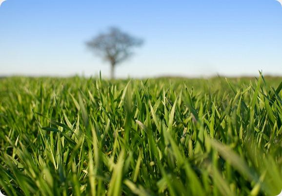 Lincolnshire-field-Threkingham.jpg