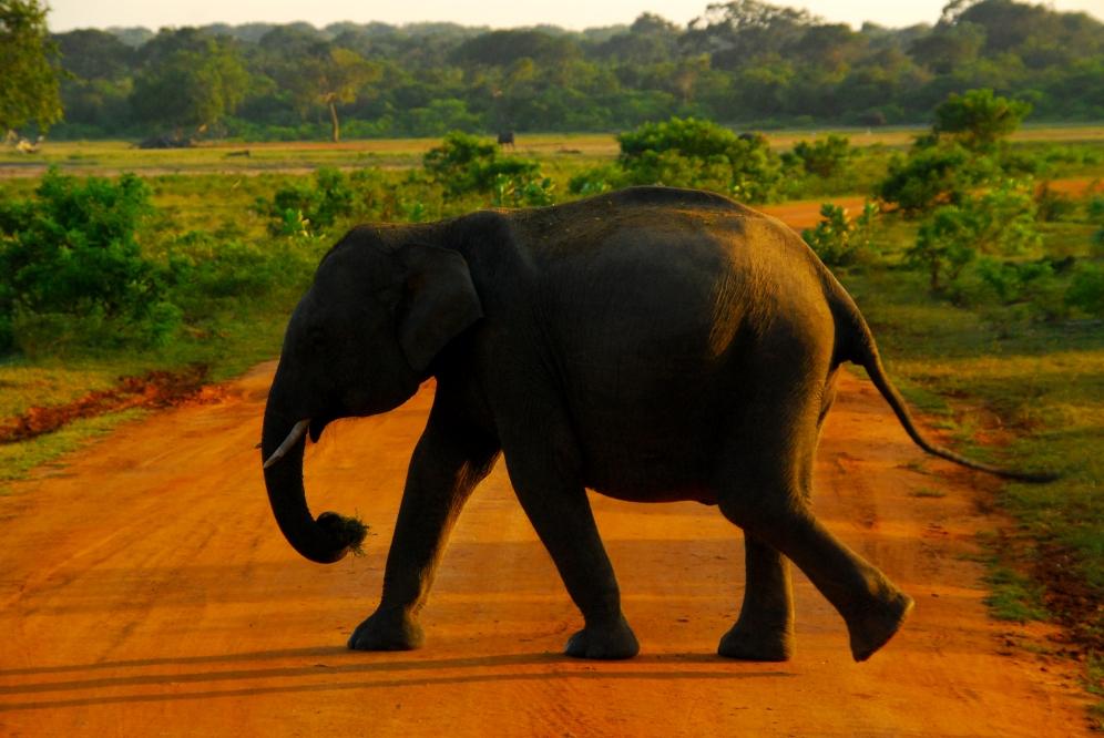 Sri Lanka - Yala