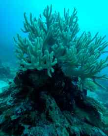 Apo Diver, Siquijor, Cebu, The Philippines