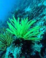 Apo Diver, Siquijor, Cebu, The Philippines