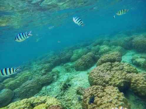 Under the sea - Pulau Kapas - Malaysia