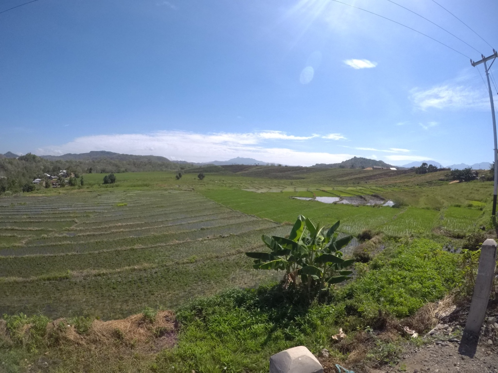 A paddy field along the Trans Flores Highway