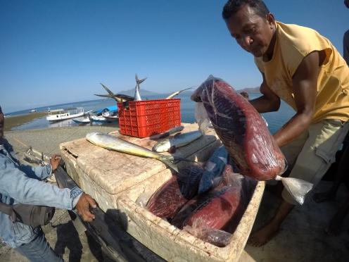 freshly caught tuna fish