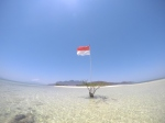 a lone tree with an Indonesian flag in the middle of shallow sea
