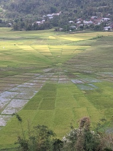The Lingko Paddy Field viewed from above.