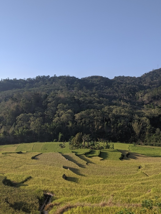 A rice paddy with trees surrounding and a blue sky above.