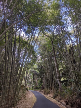 Looking through a forest of bamboo trees