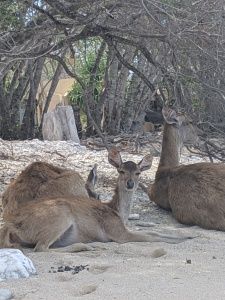 three deer lying on the sand underneath a tree on the beach