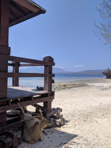 a deer sat in the shade next to a pier on Menjangan Island