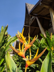 an orange tropical plant in front of a small wooden bungalow