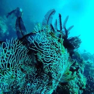 West Bali National Park - Scuba Diving with Blue Corner Dive