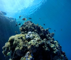 West Bali National Park - Scuba Diving with Blue Corner Dive